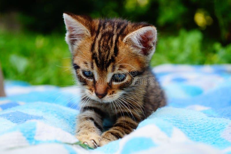 γάτα λίγα στοκ εικόνες με δικαίωμα ελεύθερης χρήσης
