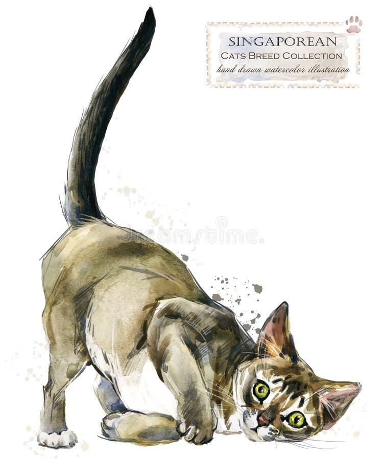 Γάτα απεικόνιση εγχώριων κατοικίδιων ζώων watercolor Σειρά φυλών γατών απεικόνιση αποθεμάτων