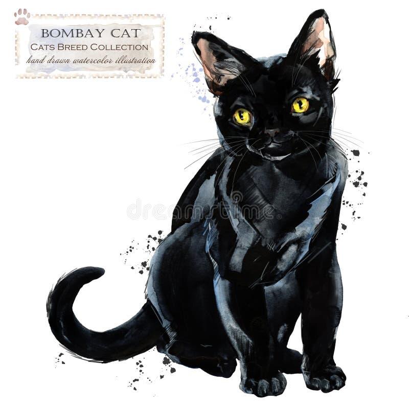 Γάτα απεικόνιση εγχώριων κατοικίδιων ζώων watercolor Σειρά φυλών γατών ελεύθερη απεικόνιση δικαιώματος