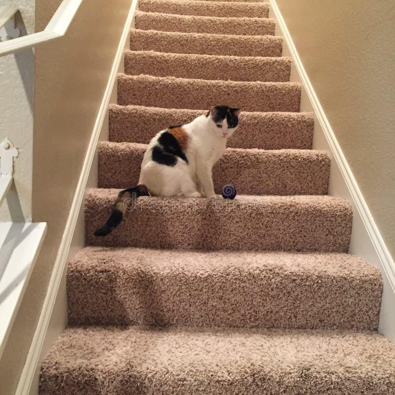 Γάτα βαμβακερού υφάσματος στα σκαλοπάτια στοκ εικόνα