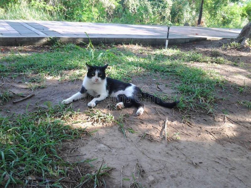 Γάτα Βοημίας στοκ φωτογραφία