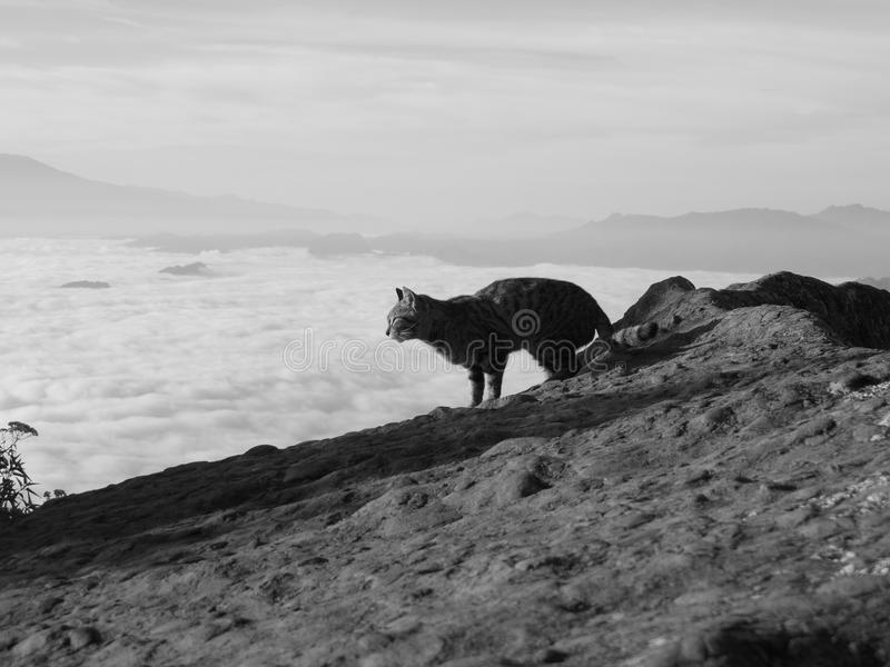 Γάτα βουνών στοκ εικόνα
