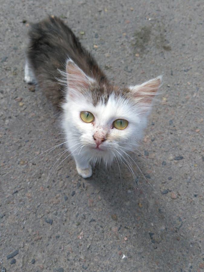 γάτα βρώμικη στοκ εικόνα