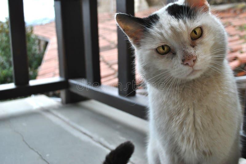 γάτα γατών στοκ φωτογραφίες