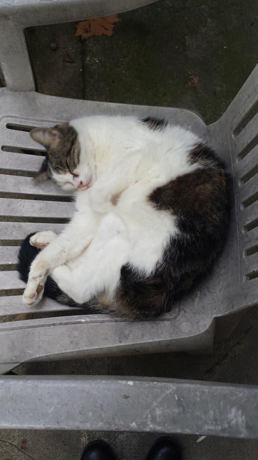 Γάτα γειτονιάς στοκ φωτογραφία