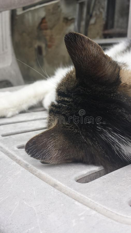 Γάτα γειτονιάς στοκ φωτογραφία με δικαίωμα ελεύθερης χρήσης