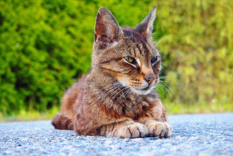 Γάτα γειτονιάς Lounging στοκ εικόνα με δικαίωμα ελεύθερης χρήσης
