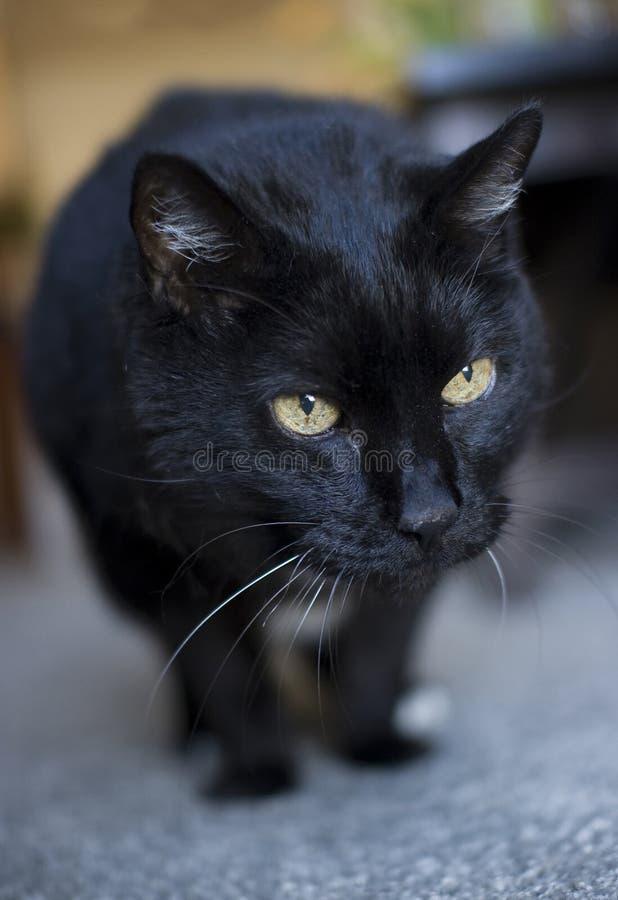 γάτα δεκαοχτώ παλαιό έτος στοκ φωτογραφία με δικαίωμα ελεύθερης χρήσης