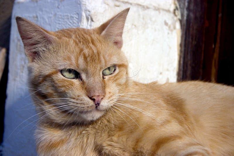 γάτα ελληνικά στοκ εικόνα