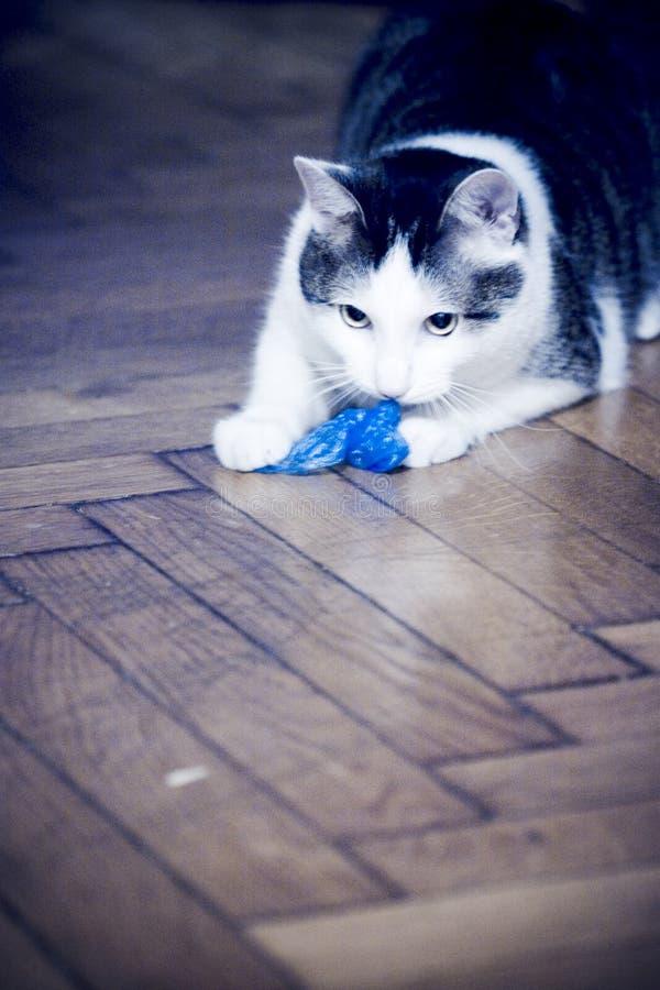 Download γάτα εύθυμη στοκ εικόνα. εικόνα από παιχνίδι, stare, γατάκι - 1540157