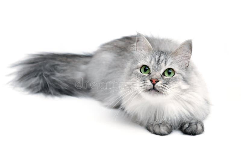 γάτα εύθυμη στοκ εικόνες
