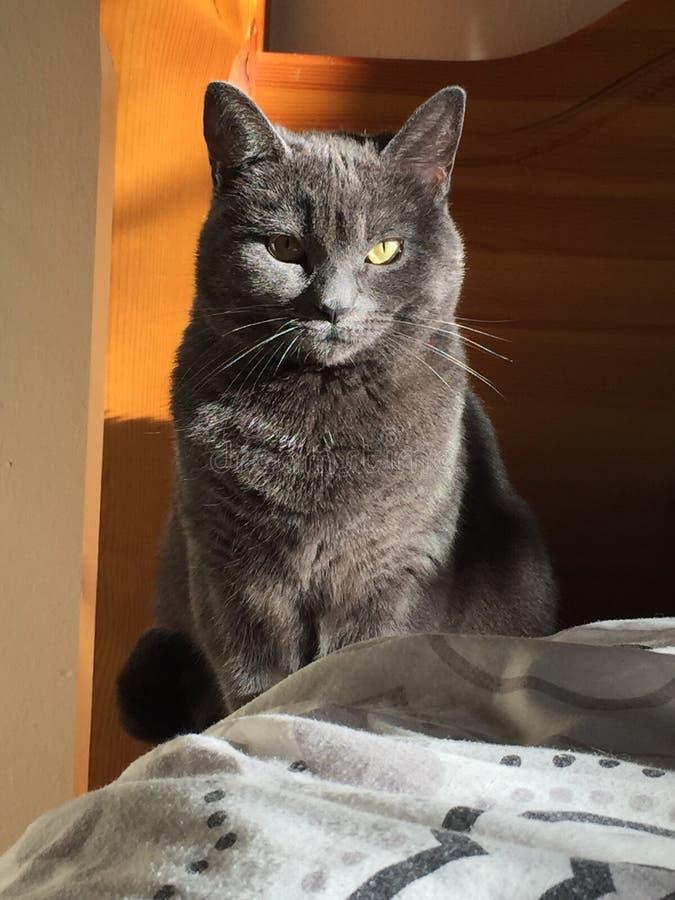 Γάτα ηλιοφάνειας στοκ φωτογραφία με δικαίωμα ελεύθερης χρήσης
