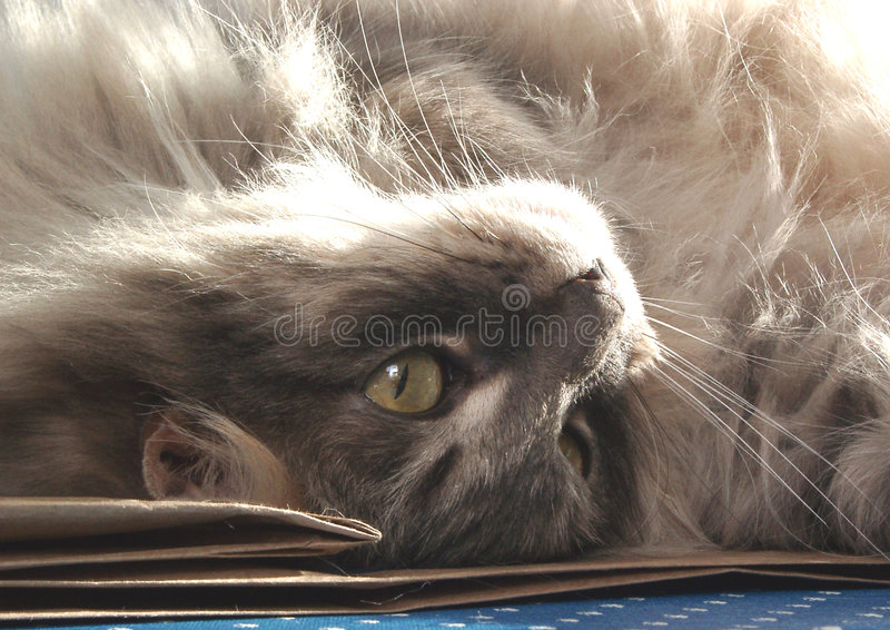 γάτα κάτω από την άνω πλευρά στοκ εικόνα
