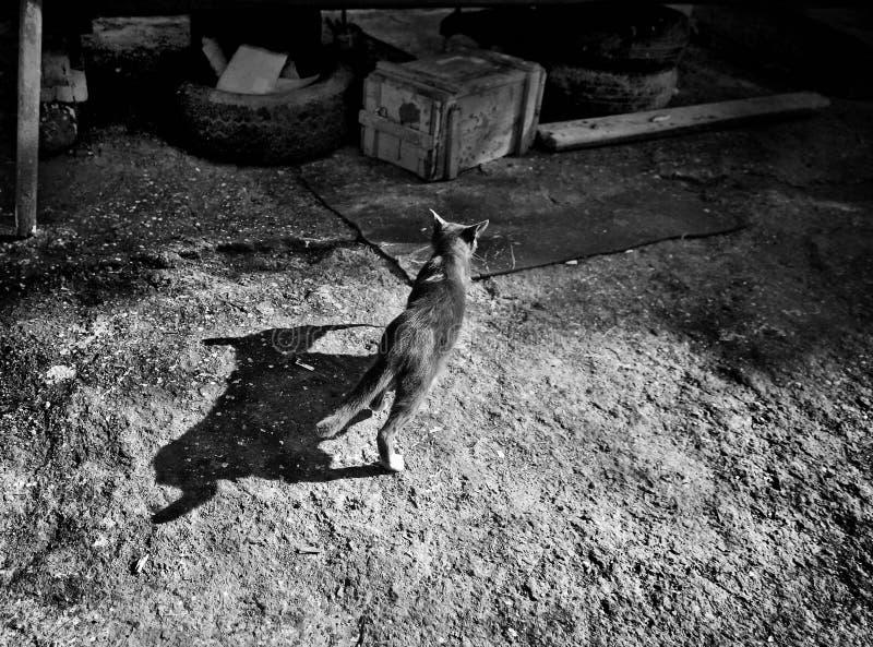 Γάτα και η σκιά της monotone στοκ εικόνα με δικαίωμα ελεύθερης χρήσης