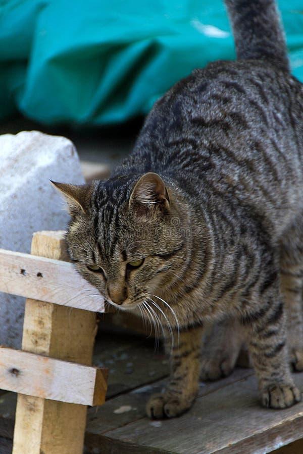Γάτα και μάτια γατών στοκ εικόνες