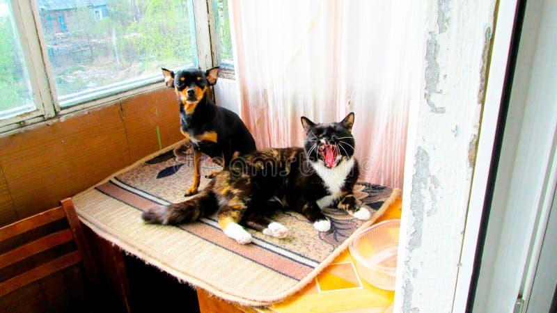 Γάτα και μαύρο τεριέ παιχνιδιών στοκ εικόνες