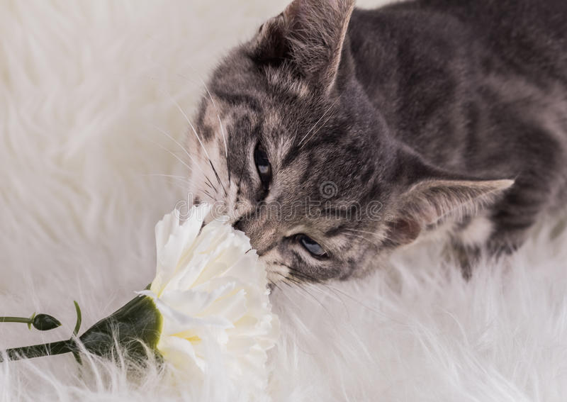 Γάτα και λουλούδι στοκ φωτογραφία