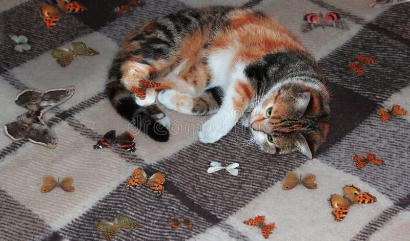 Γάτα και πεταλούδα στοκ εικόνες