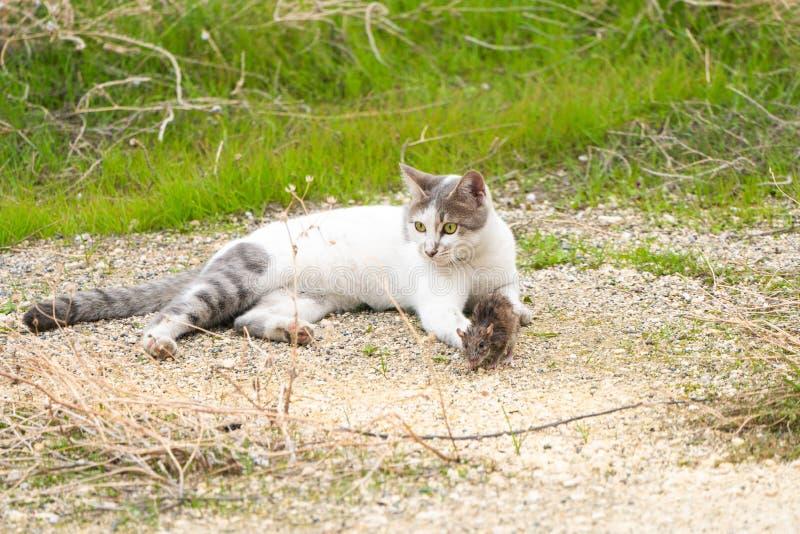 Γάτα και ποντίκι στη φύση στοκ εικόνες με δικαίωμα ελεύθερης χρήσης