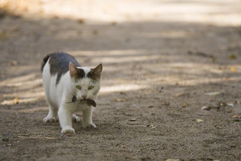 Γάτα και ποντίκι στοκ εικόνα