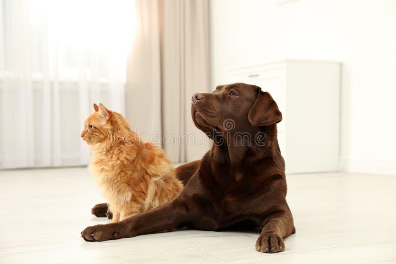 Γάτα και σκυλί μαζί στο πάτωμα στο εσωτερικό στοκ φωτογραφίες με δικαίωμα ελεύθερης χρήσης