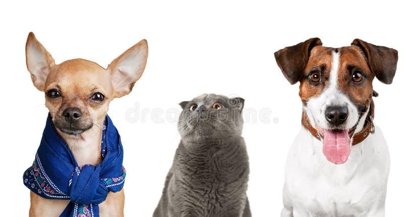 Γάτα και σκυλί στοκ εικόνες με δικαίωμα ελεύθερης χρήσης