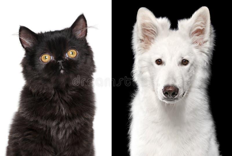Γάτα και σκυλί fractal λουλουδιών σχεδίου καρτών ανασκόπησης μαύρο καλό λευκό αφισών ogange στοκ φωτογραφίες