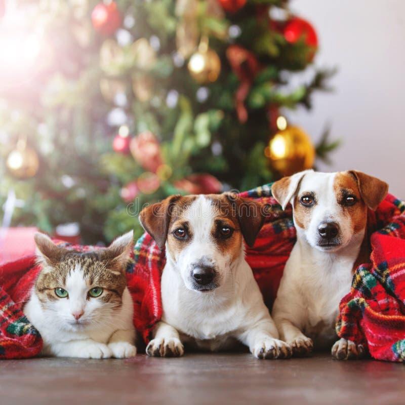 Γάτα και σκυλιά κάτω από ένα χριστουγεννιάτικο δέντρο στοκ εικόνες