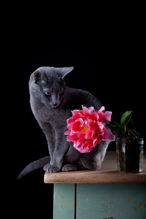 Γάτα και τουλίπα στοκ εικόνες με δικαίωμα ελεύθερης χρήσης