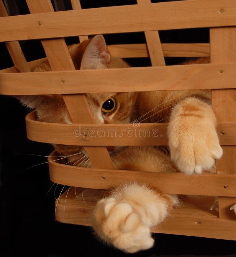 Γάτα 2 καλαθιών στοκ εικόνες με δικαίωμα ελεύθερης χρήσης