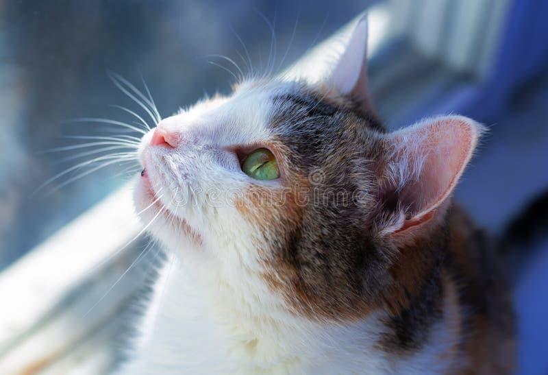 γάτα κινηματογραφήσεων σε πρώτο πλάνο στοκ φωτογραφία
