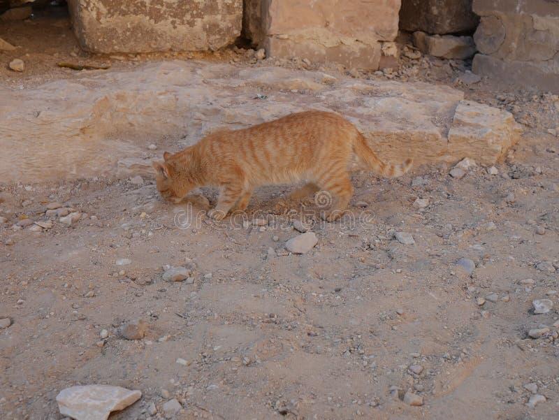 Γάτα κοντά σε Mastaba, δίπλα στην πυραμίδα Khufu ` s και sphinx στοκ φωτογραφία με δικαίωμα ελεύθερης χρήσης