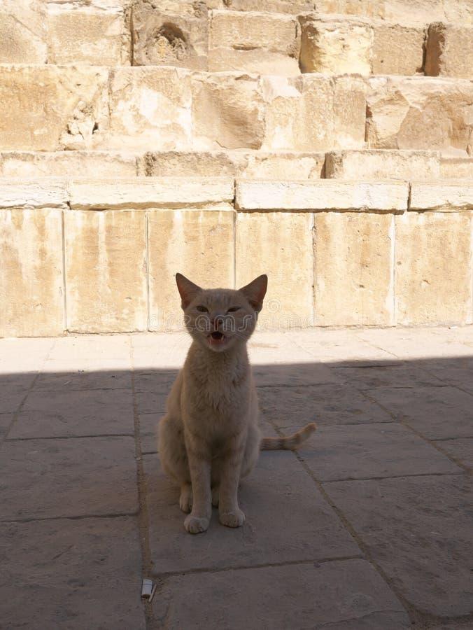 Γάτα κοντά σε Mastaba, δίπλα στην πυραμίδα Khufu ` s και sphinx στοκ εικόνες με δικαίωμα ελεύθερης χρήσης