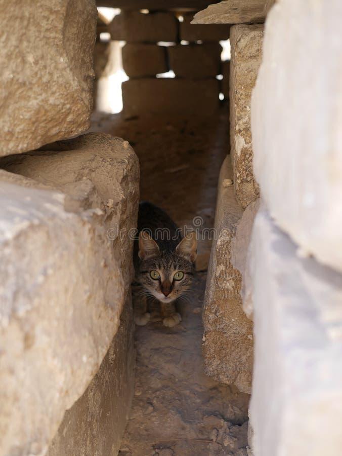 Γάτα κοντά σε Mastaba, δίπλα στην πυραμίδα Khufu ` s και sphinx στοκ εικόνα με δικαίωμα ελεύθερης χρήσης