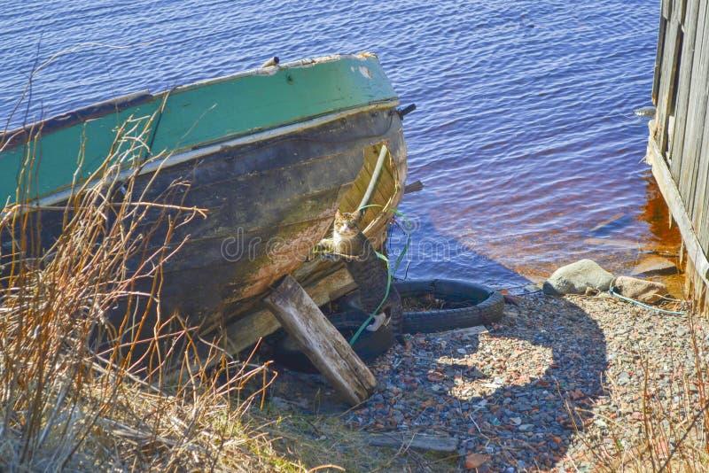 Γάτα κοντά στη βάρκα με ένα σπασμένο κατώτατο σημείο στη λίμνη στοκ εικόνες με δικαίωμα ελεύθερης χρήσης