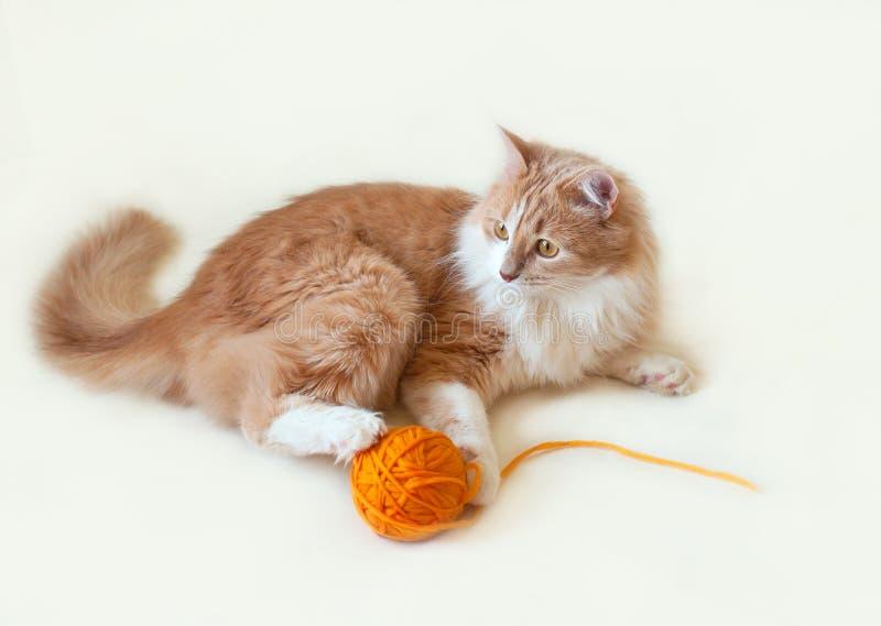 Γάτα, κόκκινος και χνουδωτός στοκ εικόνα