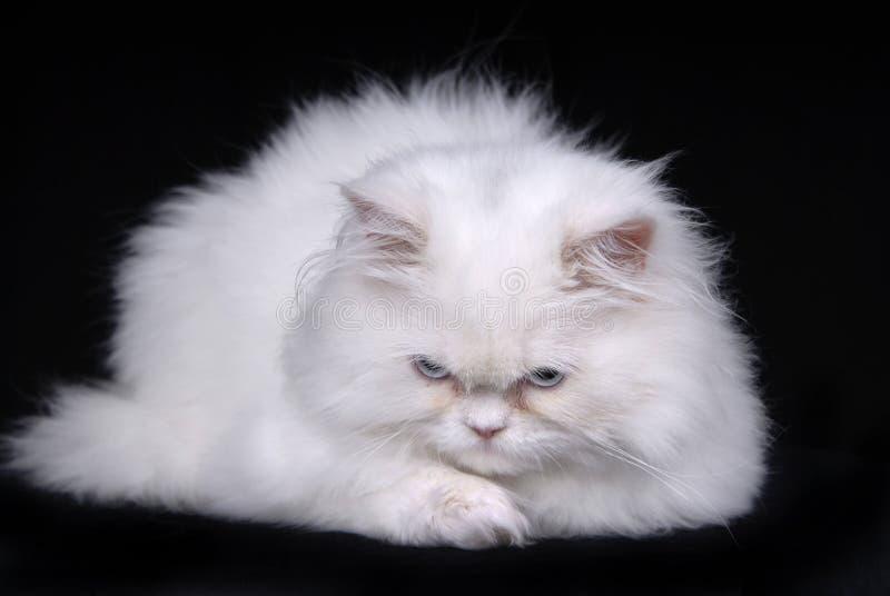 γάτα λυπημένη στοκ φωτογραφία με δικαίωμα ελεύθερης χρήσης