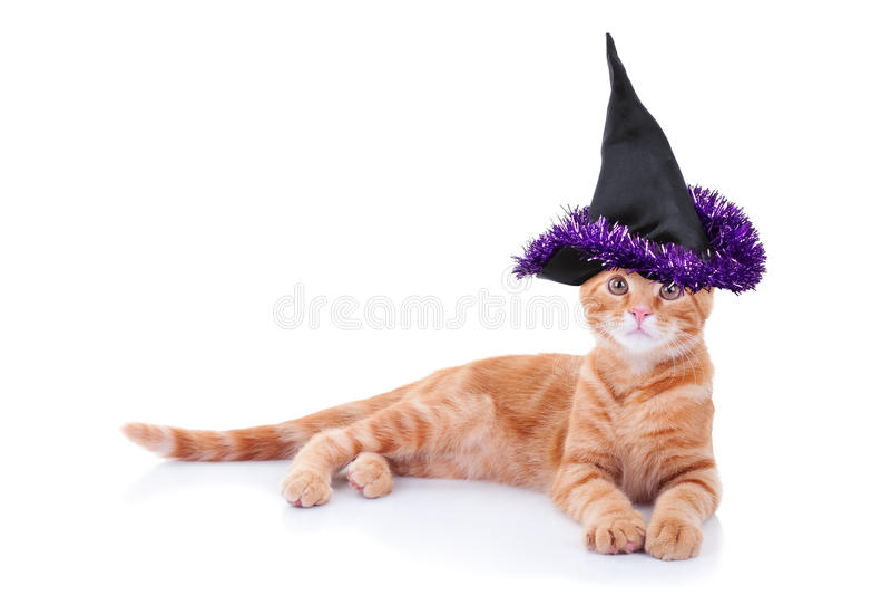 Γάτα μαγισσών στοκ φωτογραφία με δικαίωμα ελεύθερης χρήσης