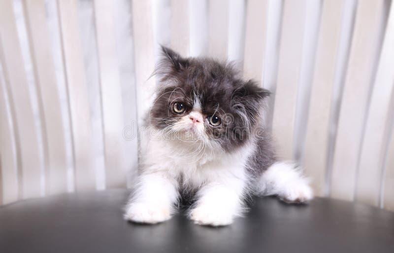 Γάτα ματιών γατών στοκ εικόνες με δικαίωμα ελεύθερης χρήσης