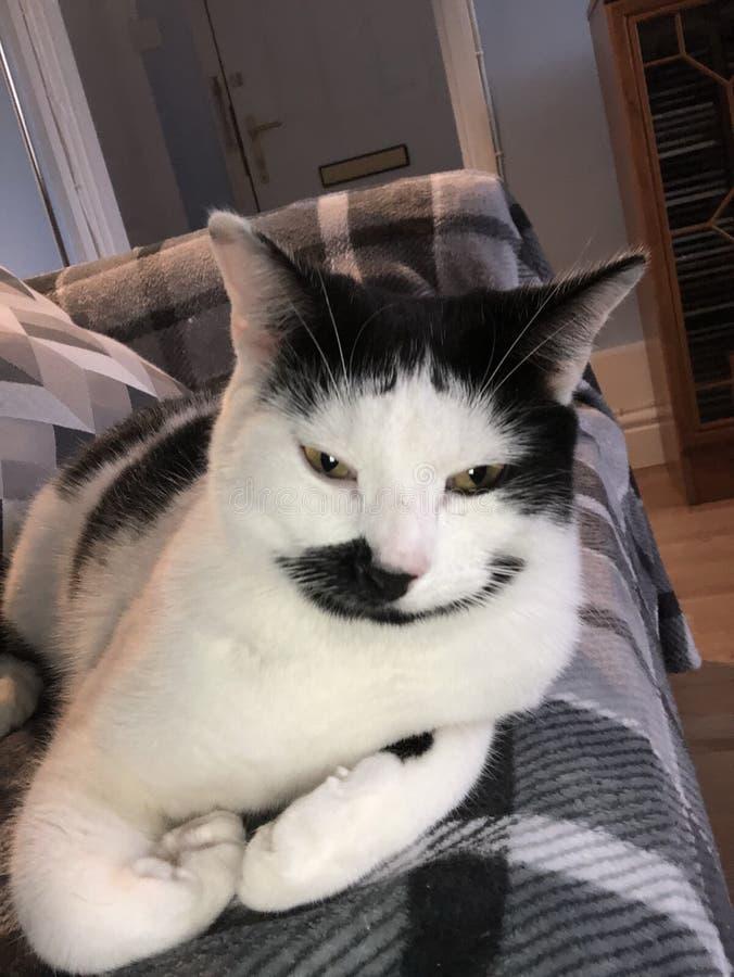 Γάτα με καλό Swag στοκ φωτογραφία με δικαίωμα ελεύθερης χρήσης