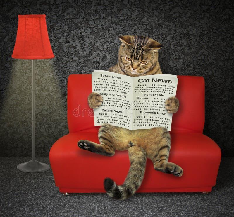 Γάτα με μια εφημερίδα στον κόκκινο καναπέ στοκ εικόνες