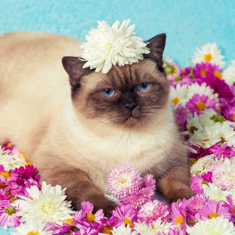 Γάτα με σημείο χρώματος με άνθη χρυσάνθεμου στοκ φωτογραφίες