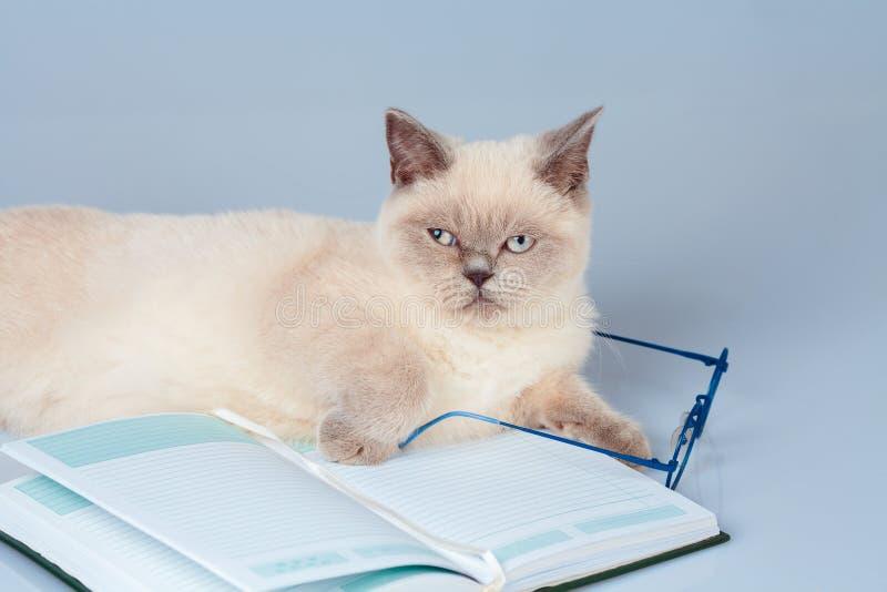 γάτα με τα γυαλιά που βρίσκονται στο βιβλίο στοκ φωτογραφία με δικαίωμα ελεύθερης χρήσης