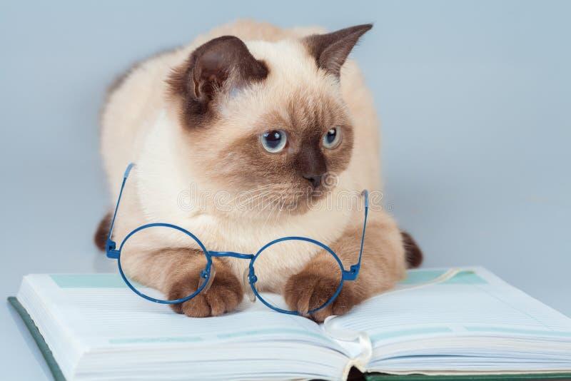γάτα με τα γυαλιά που βρίσκονται στο βιβλίο στοκ φωτογραφίες με δικαίωμα ελεύθερης χρήσης