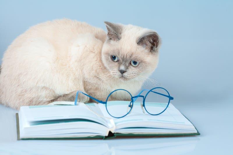 γάτα με τα γυαλιά που βρίσκονται στο βιβλίο στοκ εικόνα με δικαίωμα ελεύθερης χρήσης
