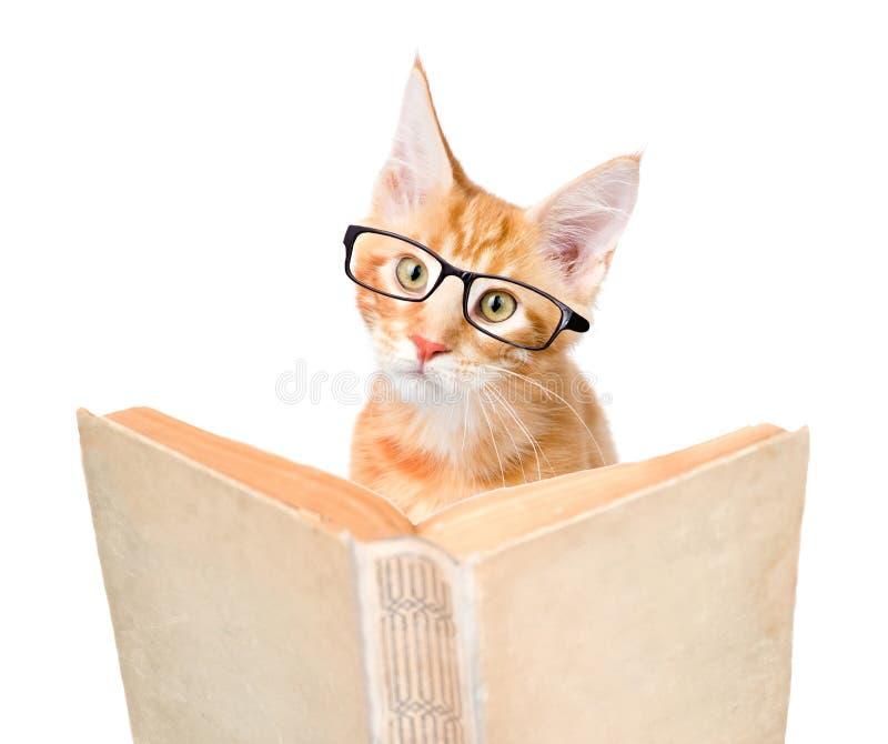 Γάτα με τα γυαλιά που διαβάζουν ένα βιβλίο η ανασκόπηση απομόνωσε το λευκό στοκ εικόνα