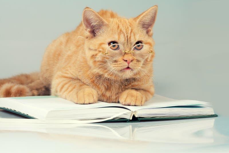 Γάτα με τα γυαλιά που βρίσκονται σε ένα βιβλίο στοκ φωτογραφία με δικαίωμα ελεύθερης χρήσης