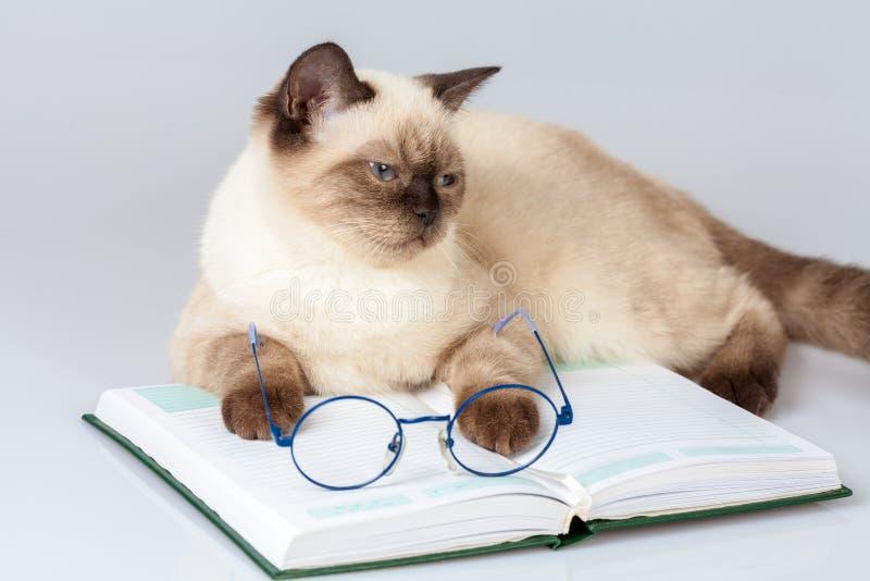 Γάτα με τα γυαλιά, που βρίσκονται στο βιβλίο στοκ φωτογραφία με δικαίωμα ελεύθερης χρήσης