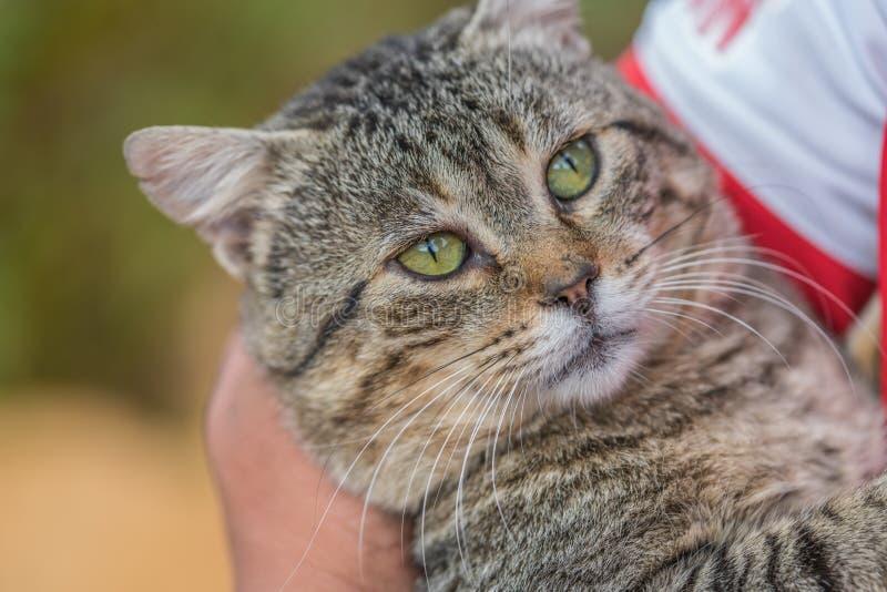 Γάτα με τα μεγάλα πράσινα μάτια στοκ φωτογραφία με δικαίωμα ελεύθερης χρήσης