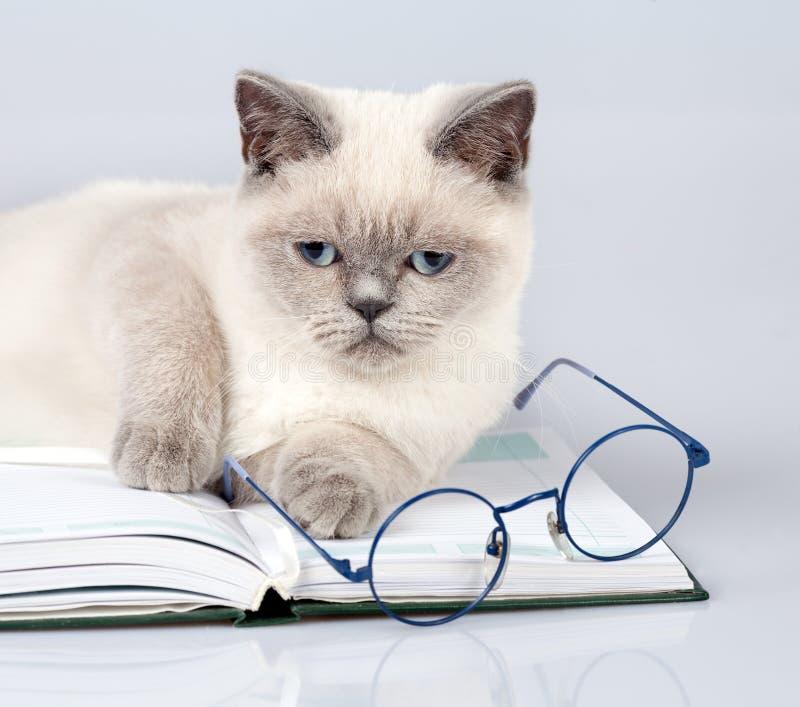 Γάτα με τα μεγάλα γυαλιά που βρίσκονται στο βιβλίο στοκ φωτογραφίες